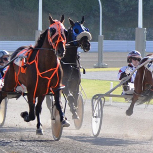 B.C. Harness Race and Silver Reef Casino